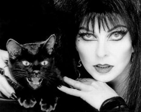 elvira black cat